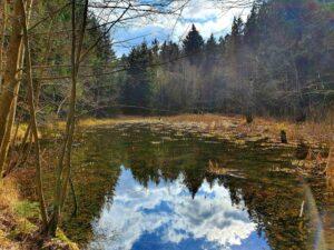 ein kleiner Teich